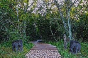 Sibuya Game Reserve and Lodge, Üdülőközpontok  Kenton on Sea - big - 33