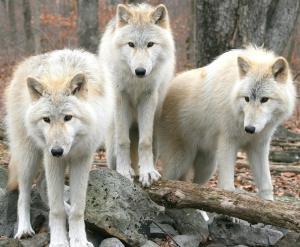 Logîte Touristique Les 3 Loups