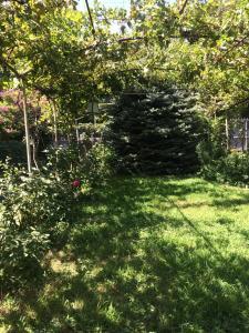 Green House, Penzióny  Lagodekhi - big - 12
