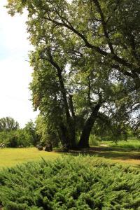 Kasztelania Pod Lipami, Agriturismi  Zakroczym - big - 25