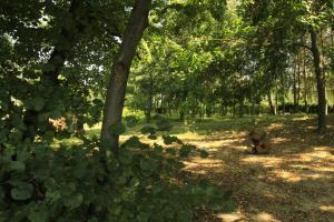 Kasztelania Pod Lipami, Agriturismi  Zakroczym - big - 26