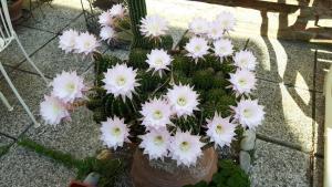 Il Giardino Roccioso - AbcAlberghi.com