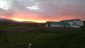 Stóra-Ásgeirsá Farm Stay.  Foto 20