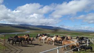 Stóra-Ásgeirsá Farm Stay.  Foto 4