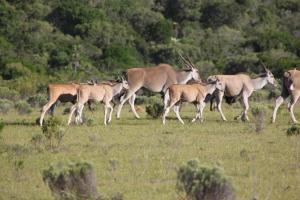 Temba Private Game Reserve