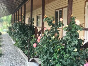 Guest house Mandarinhouse, Penzióny  Alakhadzi - big - 6