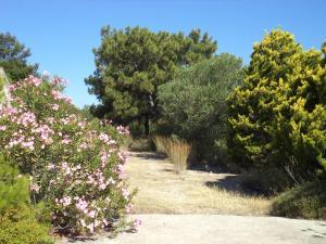 Villa Paradisos, Case vacanze  Archangelos - big - 31