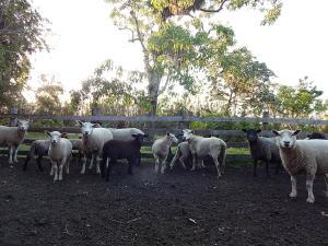Fazenda Pousada da Lagoa, Vendégházak  Arroio do Sal - big - 32