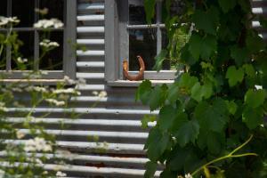 Morgantis, Prázdninové domy  Daylesford - big - 37
