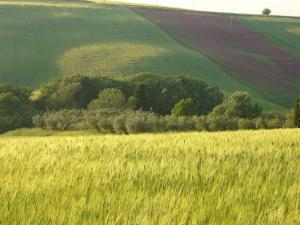 Agriturismo Fossederi, Farmy  Pieve di Santa Luce - big - 49