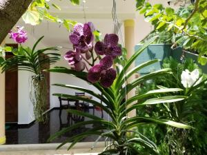 Coral Palm Villa and Apartment, Apartmány  Unawatuna - big - 54