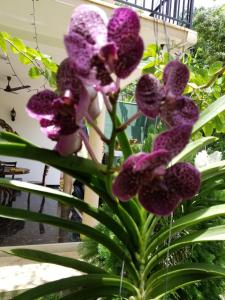 Coral Palm Villa and Apartment, Apartments  Unawatuna - big - 48