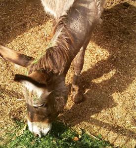 Agriturismo Su Barraccu, Farm stays  Loceri - big - 36