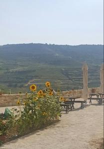 Cyprus Dream Holiday, Apartmány  Voroklini - big - 35