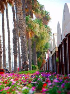 Cyprus Dream Holiday, Apartmány  Voroklini - big - 9