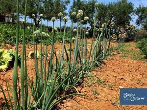 Azienda Agrituristica Baglio Carta, Farmy  Balestrate - big - 54
