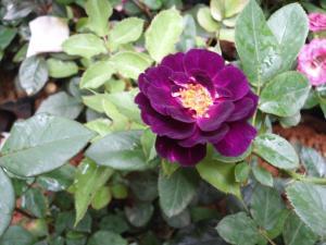 Indi Rose Garden, Resort  Habarana - big - 11