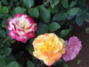 Indi Rose Garden, Resort  Habarana - big - 28