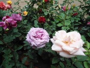 Indi Rose Garden, Resort  Habarana - big - 13