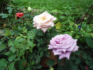 Indi Rose Garden, Resort  Habarana - big - 27