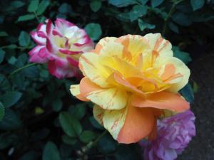 Indi Rose Garden, Resort  Habarana - big - 26