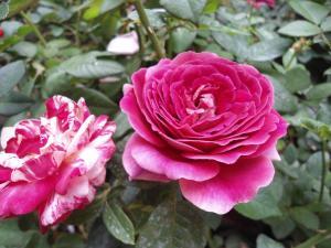 Indi Rose Garden, Resort  Habarana - big - 14