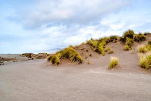 Mendocino Dunes - Dune Flower, Dovolenkové domy  Fort Bragg - big - 9