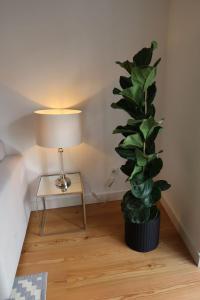Loving Chiado, Appartamenti  Lisbona - big - 4