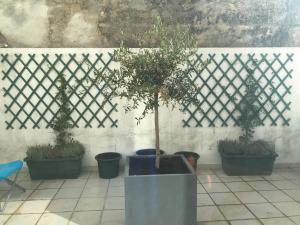 Casa do Patio, Apartments  Lisbon - big - 18