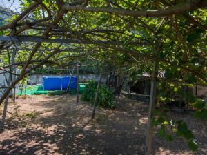 Locazione turistica La Gora, Holiday homes  Massarosa - big - 6