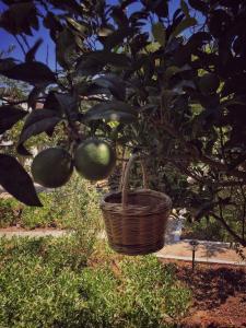 Patmos Villas, Ferienwohnungen  Grikos - big - 182
