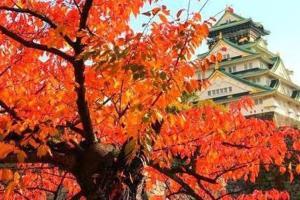 Hammock Theater, Дома для отпуска  Осака - big - 13