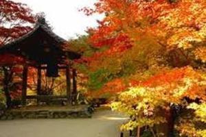 Hammock Theater, Дома для отпуска  Осака - big - 10