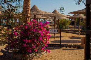 Private Apartments in Nubia Aqua Beach Resort, Apartments  Hurghada - big - 15