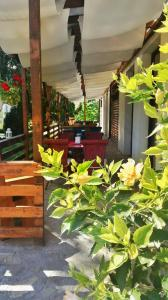 Casa Cu Nuc, Penzióny  Brebeni - big - 37