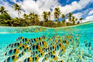 Le Taha'a Island Resort & Spa (15 of 63)
