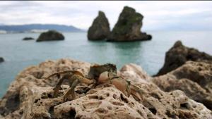 Casa bella con terrazzo sul mare - AbcAlberghi.com
