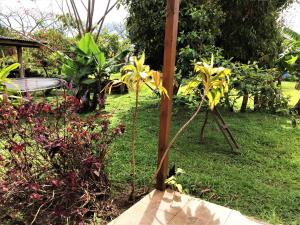 Hostal Marari, Pensionen  Hanga Roa - big - 23