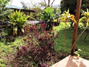 Hostal Marari, Pensionen  Hanga Roa - big - 25