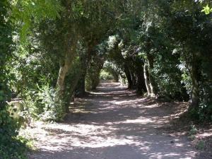 Monte da Amoreira, Ferienwohnungen  Elvas - big - 36