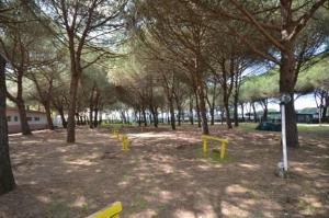 Camping Sant'Albinia, Kempingek  San Vincenzo - big - 4