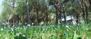 Camping Sant'Albinia, Kempingek  San Vincenzo - big - 5