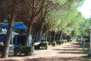 Camping Sant'Albinia, Kempingek  San Vincenzo - big - 6