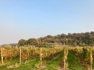 Agriturismo Sambuco