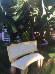 Chez Dolores, Panziók  Le Bois de Nèfles - big - 13