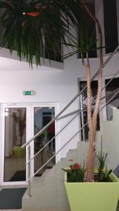 Pensiunea Sergiu & Geanina, Guest houses  Arad - big - 45