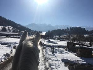 Ranch Bohinj
