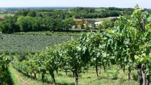Tenuta Le Sorgive Agriturismo, Farmy  Solferino - big - 28