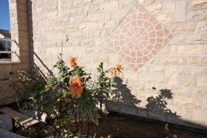 Studio Brodarica 4835a, Apartmanok  Brodarica - big - 21