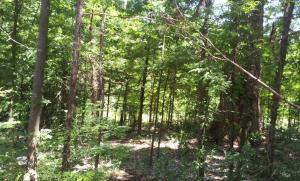 Bosque serrano